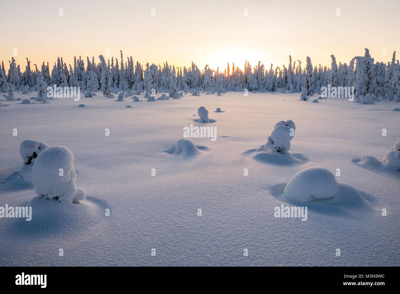 Snow-laden bosques del norte de Finlandia Imagen De Stock