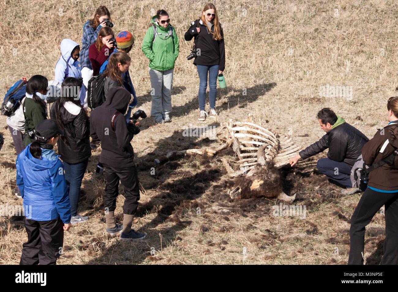 Descubrimiento de bisonte sigue impulsado sobre el terreno lección ...