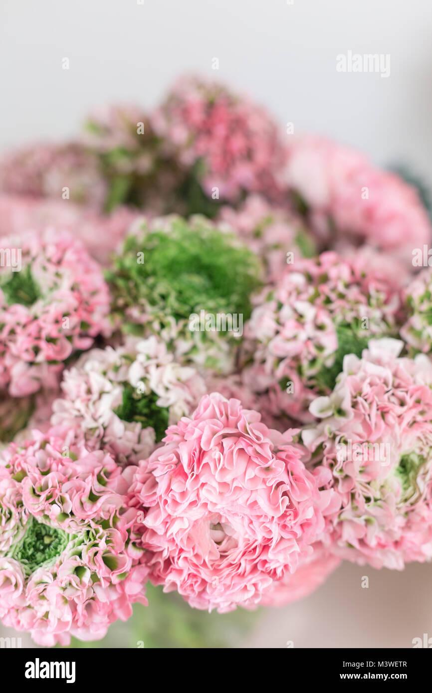 Buttercup persa. puntilla con muchos pétalos. Racimo de flores de color rosa pálido ranunculus luz de fondo. Papel tapiz Foto de stock