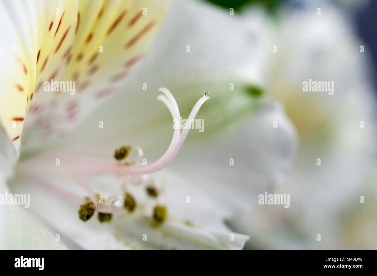 Vistoso Flor Simple Uña Viñeta - Ideas de Pintar de Uñas ...