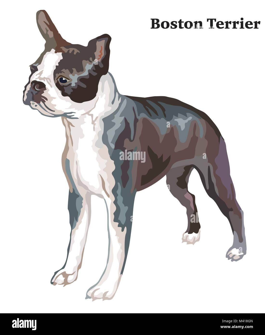 Boston Terrier Dog Vector Vectors Imágenes De Stock & Boston Terrier ...