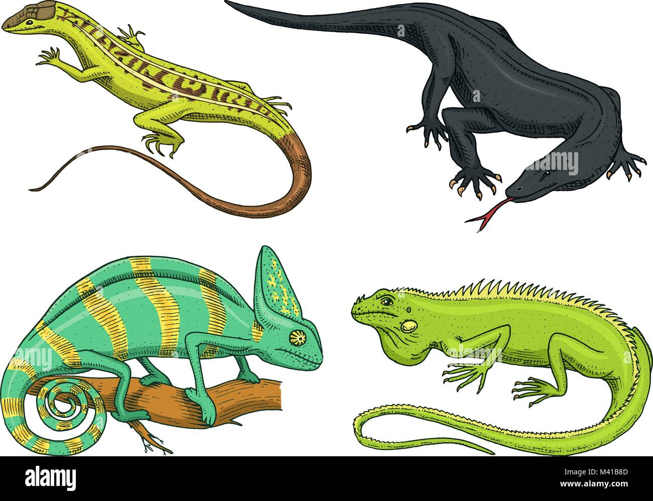 The Reptile Book Imágenes De Stock & The Reptile Book Fotos De Stock ...