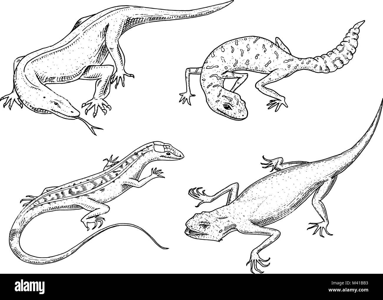Fantástico Dragón De Komodo Para Colorear Ilustración - Enmarcado ...