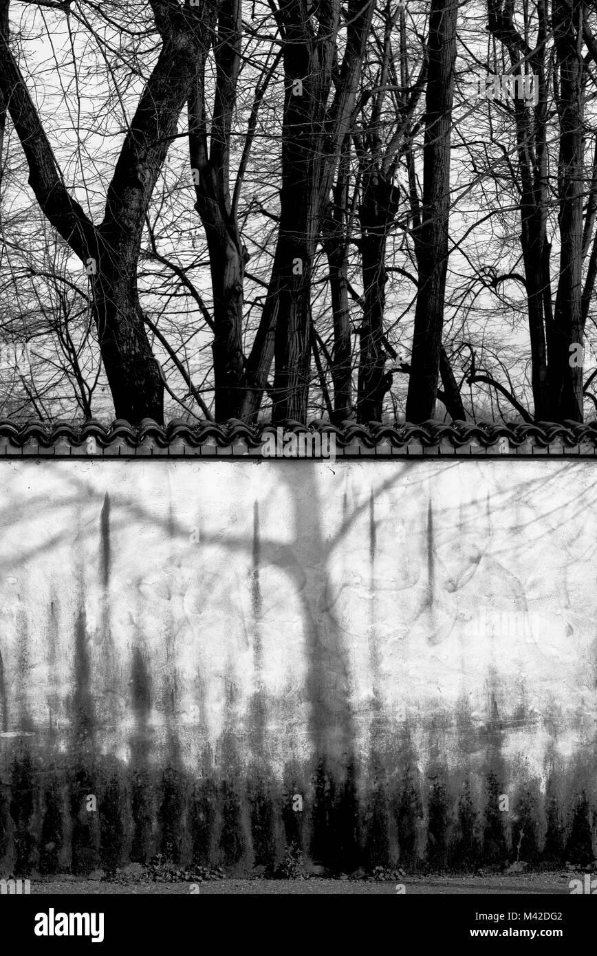Sombra de árbol en la pared Foto de stock