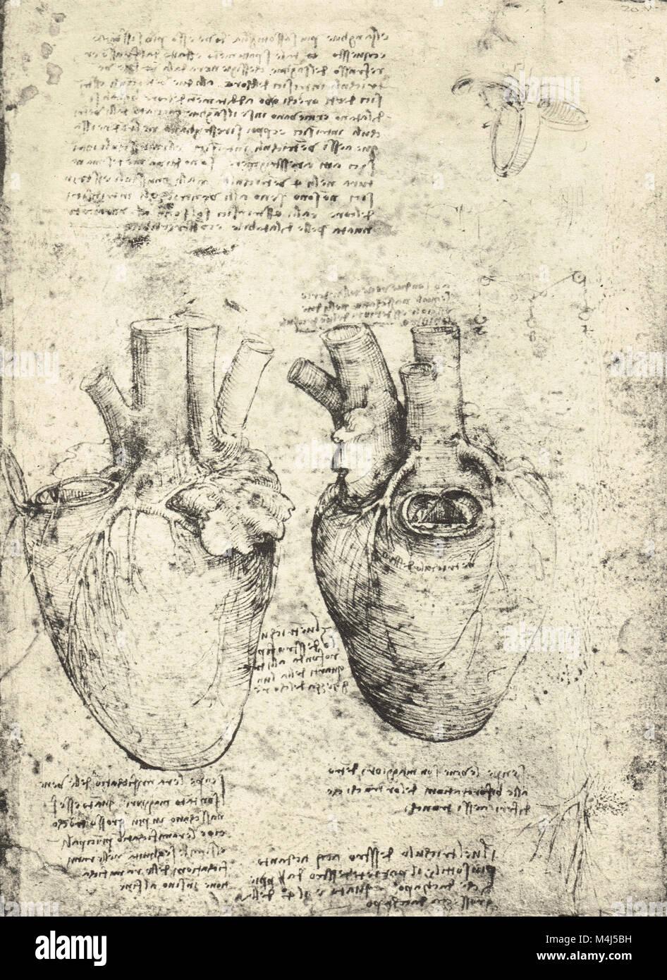 Drawn By Leonardo Da Vinci Imágenes De Stock & Drawn By Leonardo Da ...