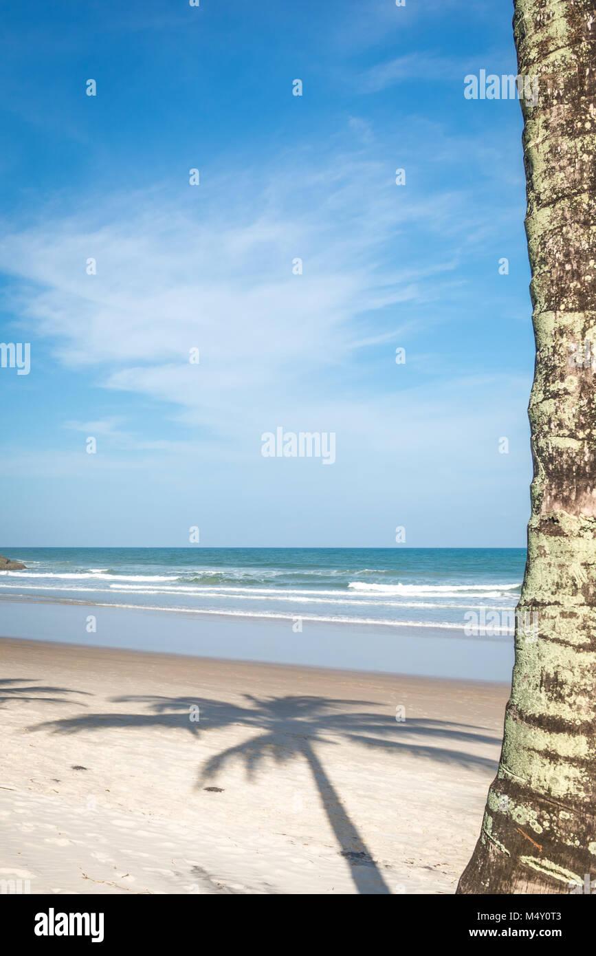 Vista de árbol de cocoteros de la playa. Imagen De Stock