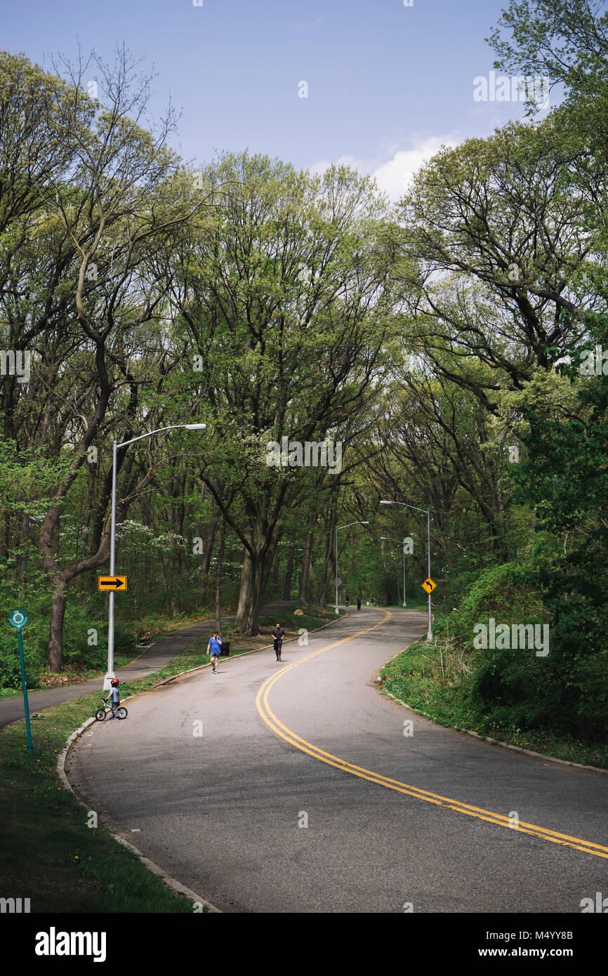 La gente correr, caminar y andar en bicicleta por la carretera a través del Parque Forestal de Queens, Ciudad de Nueva York, EE.UU. Foto de stock