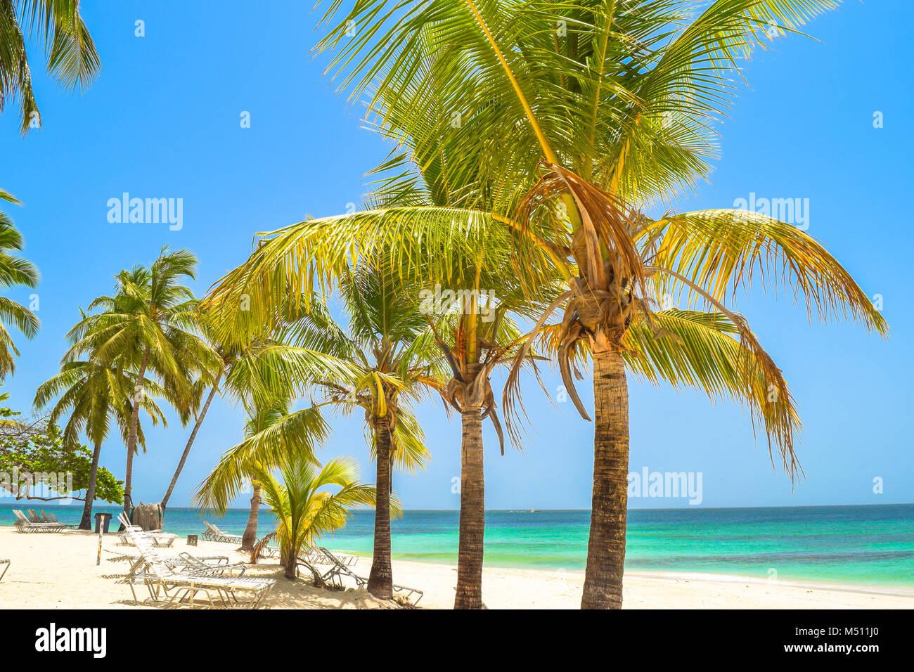 Hermosa playa con palmeras, reposeras, cielo azul y el agua color turquesa, República Dominicana, Samana, pequeña Imagen De Stock