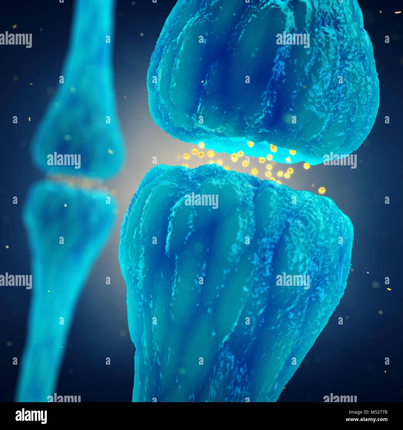 La transmisión sináptica , el sistema nervioso, la sinapsis cerebral Imagen De Stock