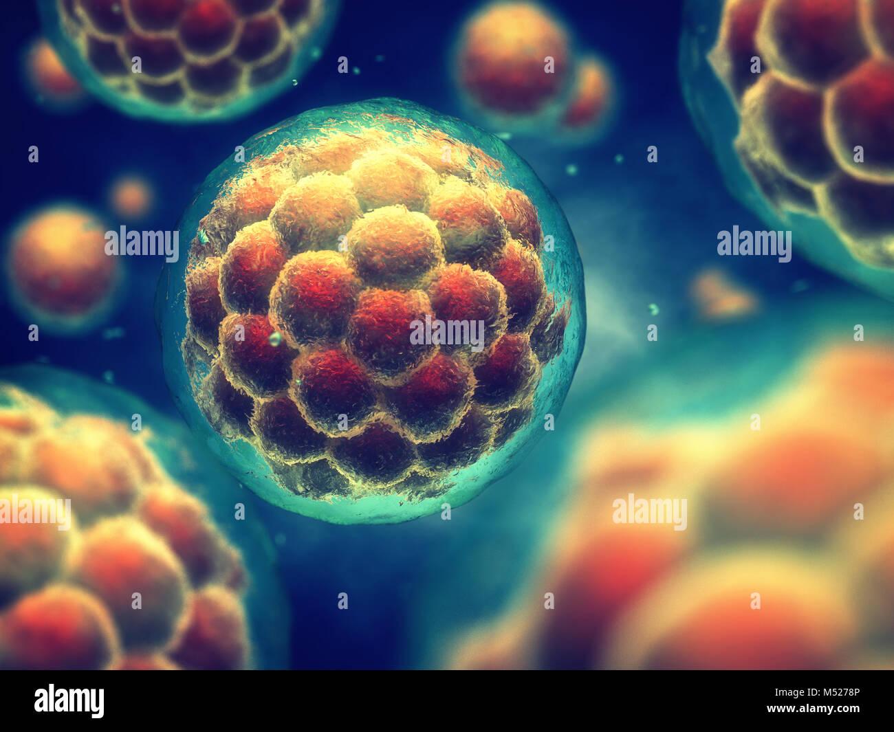Una mórula es un estadio temprano embrión compuesto de celdas , la investigación de células madre y el tratamiento Foto de stock