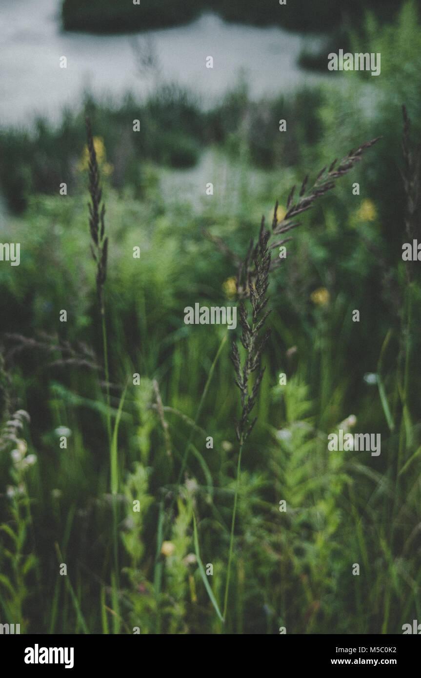 Primer plano de hierba. El estado de ánimo de verano. Verde hierba fresca. Foto de stock