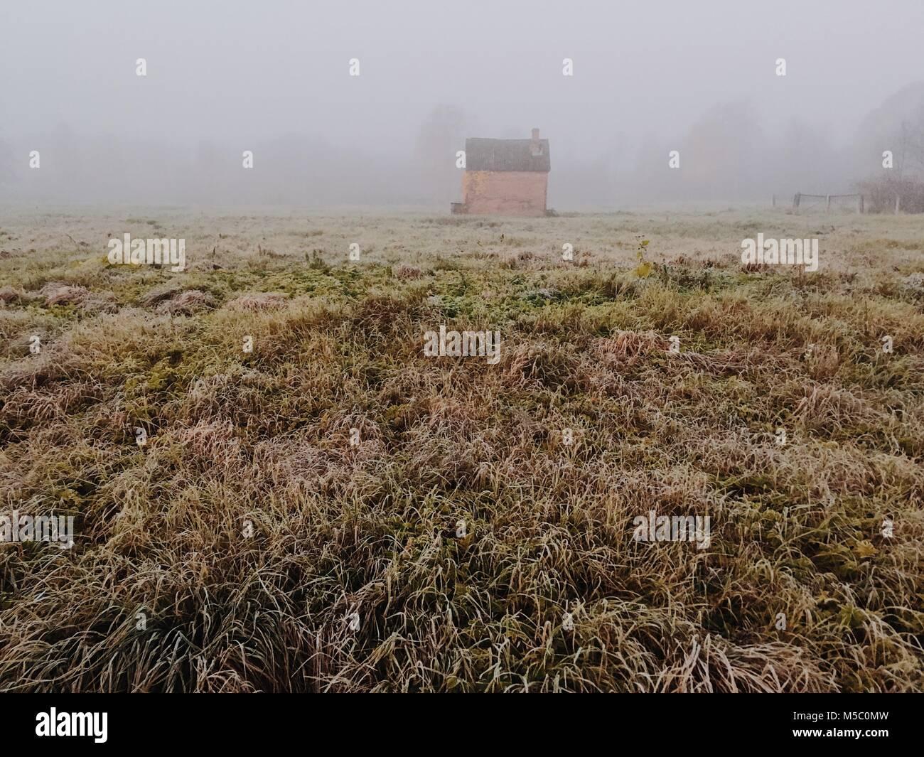 Campo de hierba. Hermosa mañana neblinosa escena con un pequeño cobertizo. Imagen De Stock