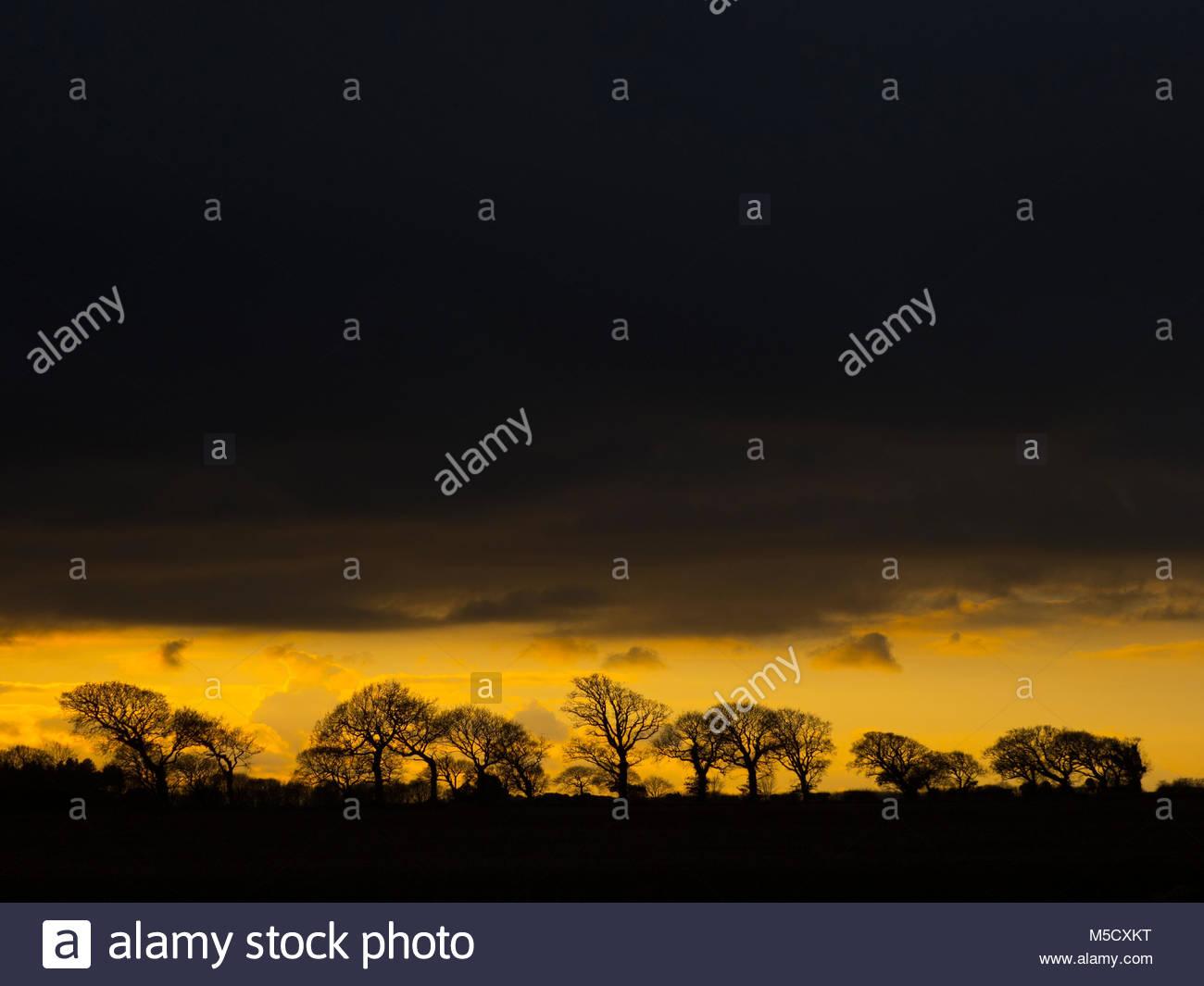 Las tierras cultivables y encinas Southrepps Norfolk al atardecer Imagen De Stock