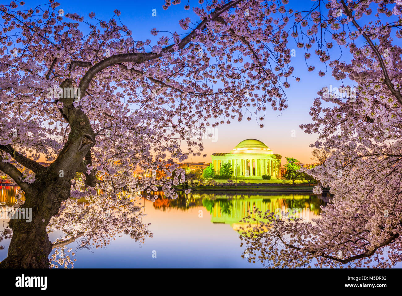 Washington DC, EE.UU., en el Jefferson Memorial y Tidal Basin durante la temporada de primavera. Imagen De Stock