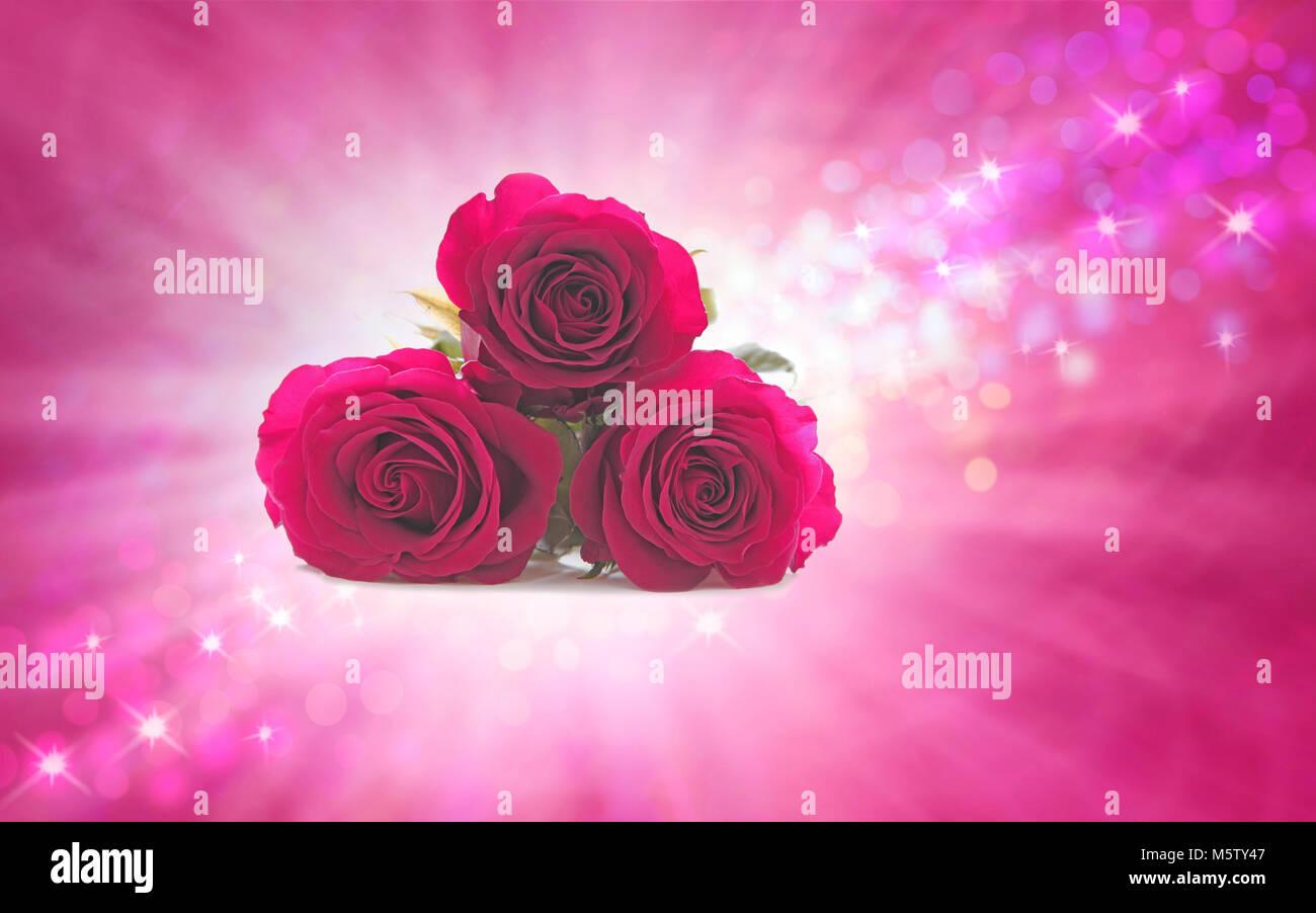 Mimando Domingo Rosas en especial su mamá, tres hermosas rosa rosa jefes agrupados juntos contra una ráfaga Imagen De Stock