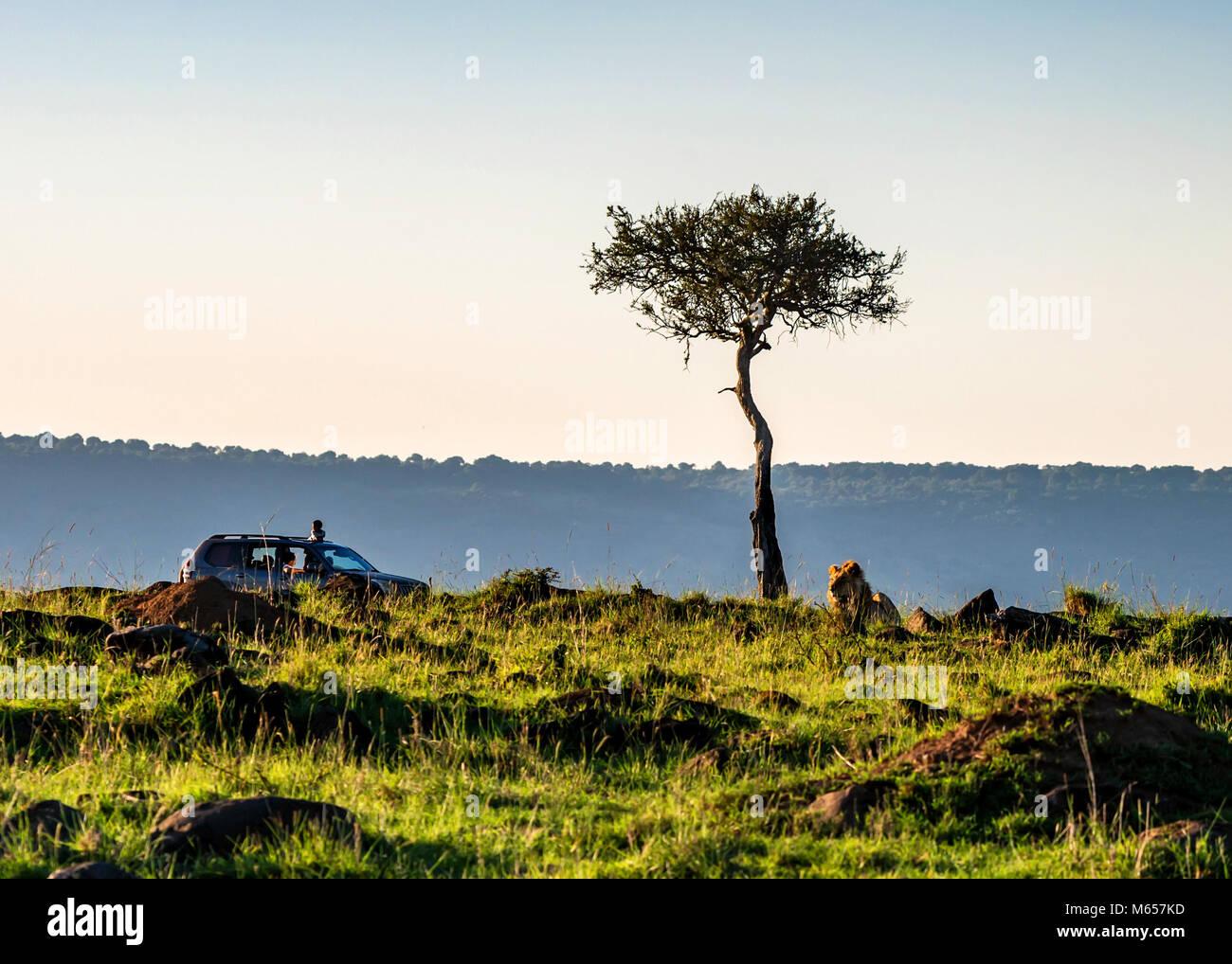 Vista de Safari con el camión y un león en Kenya Foto de stock