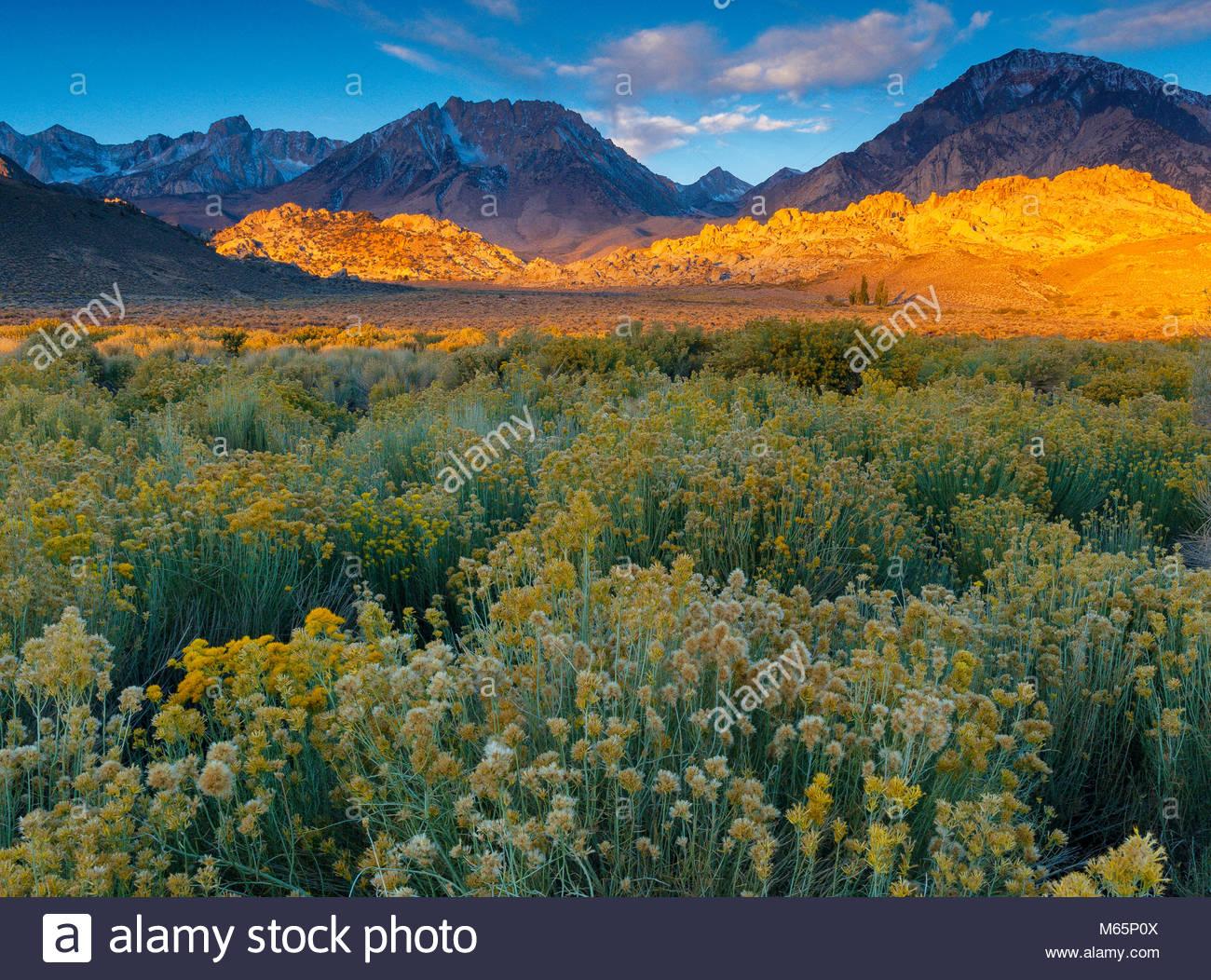 Al amanecer, la cuenca Buttermilks, montaña, Monte, Tom Bishop Creek National Recreation Area, Inyo National Imagen De Stock