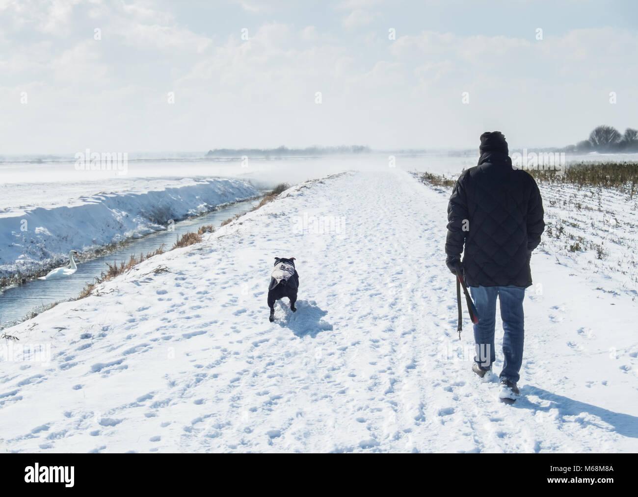 Hombre caminando en un enorme abrigo negro de staffordshire bull terrier, perro en un día de invierno con nieve en el suelo y el viento soplando a través de los campos de nieve en Kent. Foto de stock