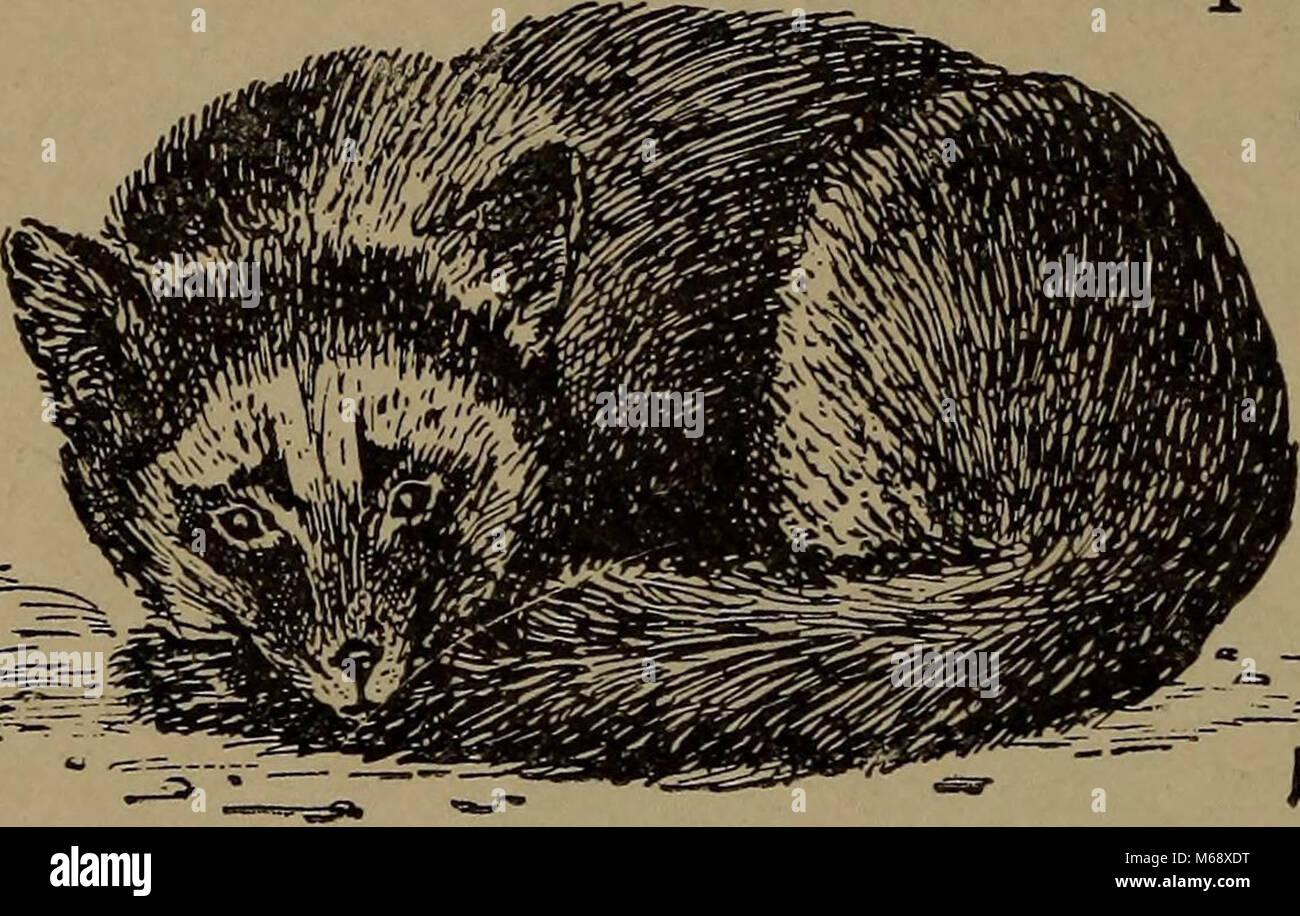 'La vida familiar en el campo y bosque; los animales, aves, ranas y salamandras' (1898) Foto de stock