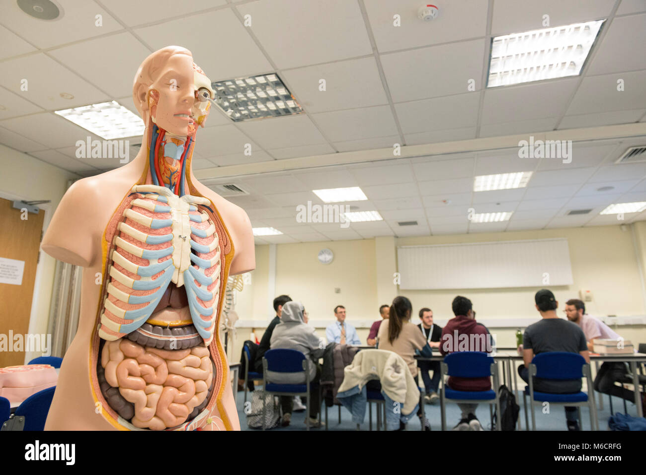 Ayudas para la formación médica en un aula de enseñanza de la ...