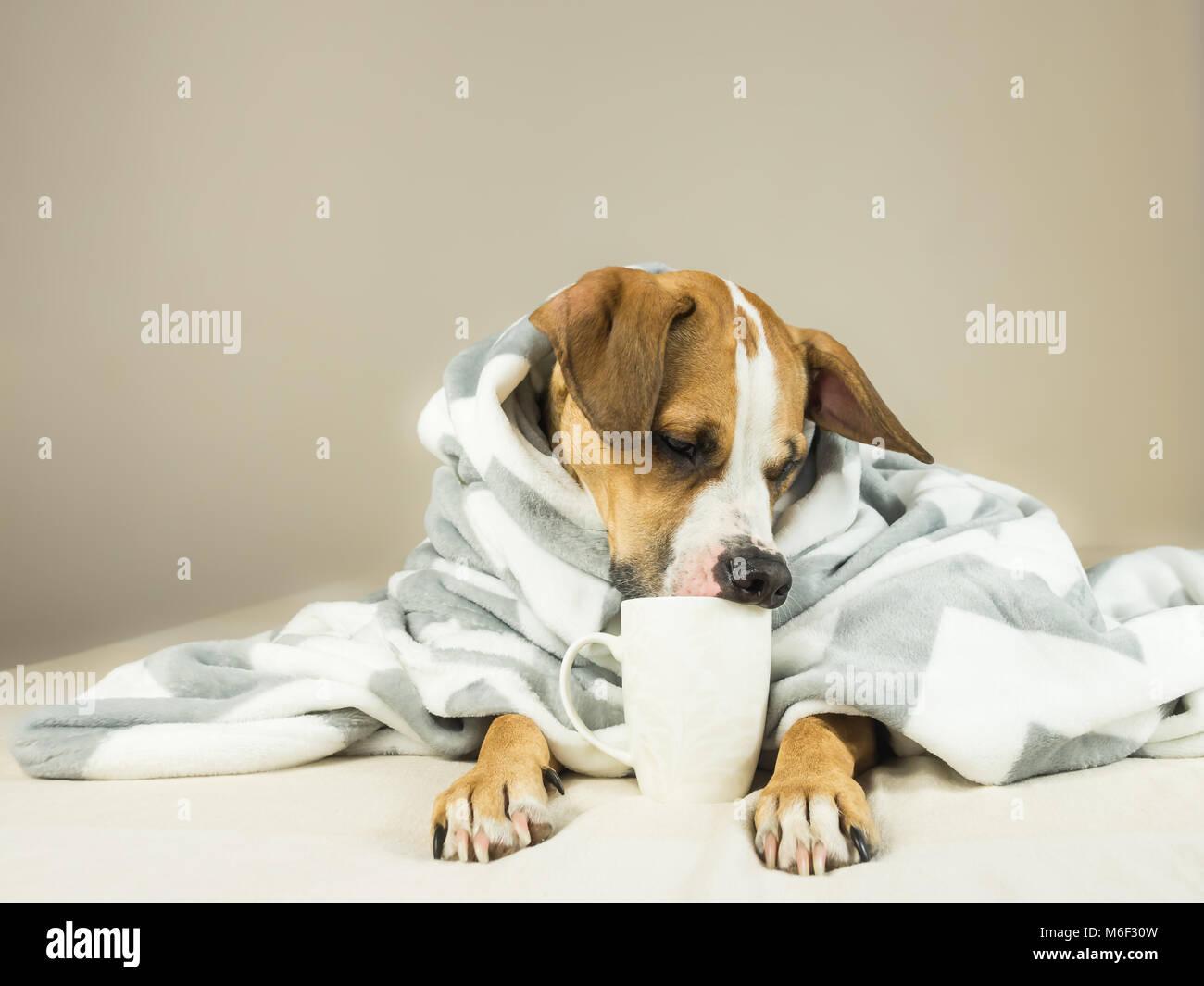 Lindo Perro Gracioso Posando En La Cama Con Cuadros Escoceses Y La