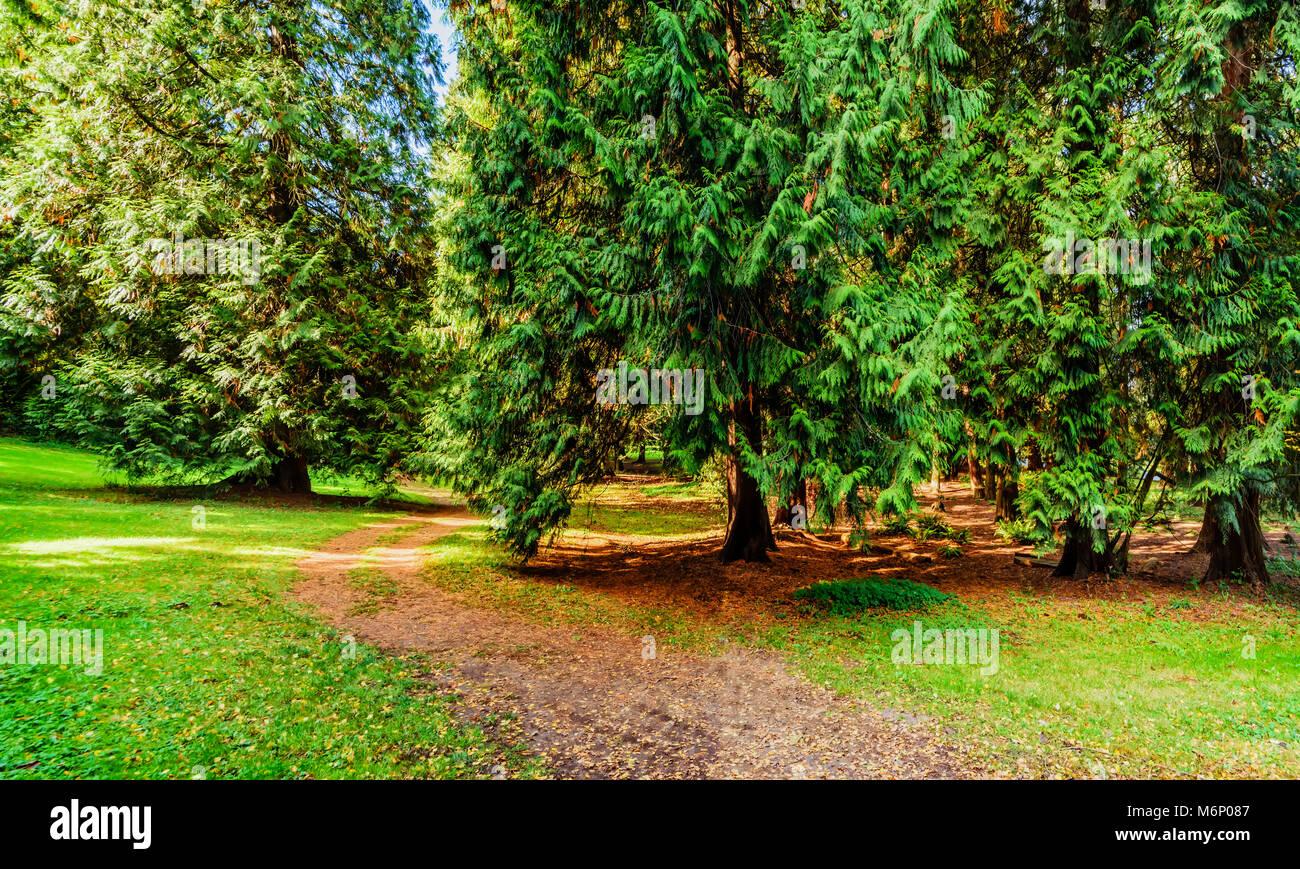 Un Camino De Tierra En Un Bosque Subtropical Con Grandes árboles