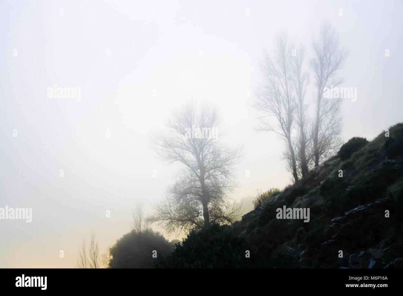Las Alpujarras, Sierra Nevada, provincia de Granada, Andalucía, España : Los árboles en la niebla en O Sel Ling centro de retiros de meditación budista, afiliado Foto de stock