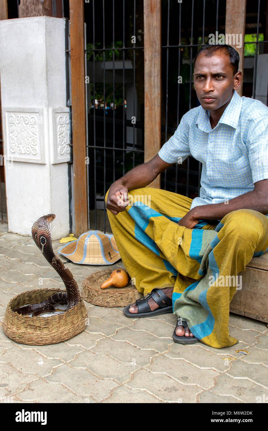 Charmer de serpientes en sarong con cobra India (Naja Naja) en Kandy, Sri Lanka Foto de stock