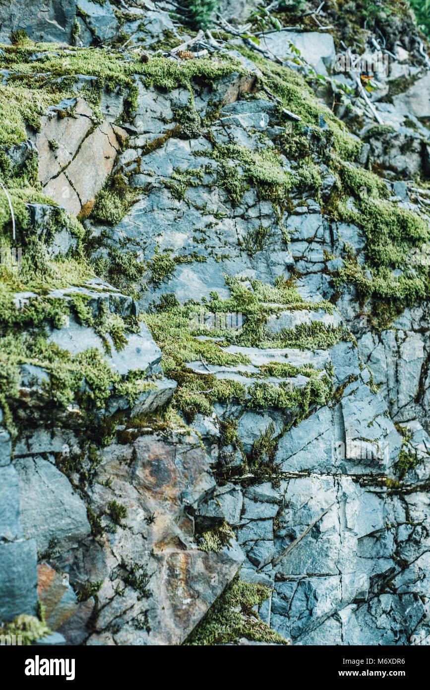 Moss crece sobre rocas en el parque nacional de los fiordos de Kenai Imagen De Stock