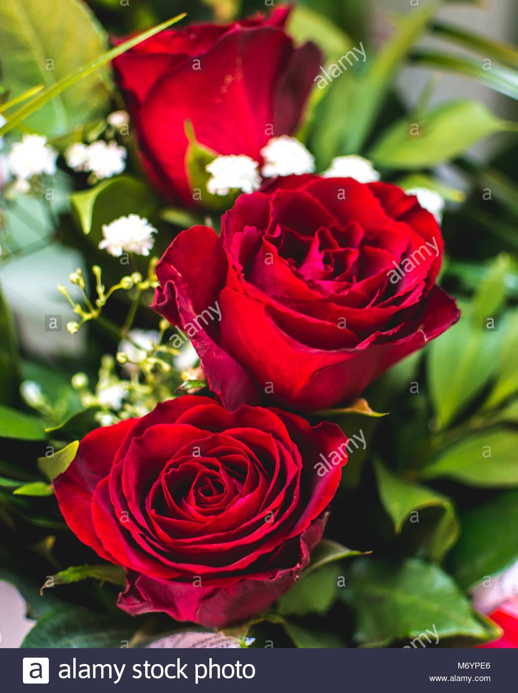 una rosa es una expresi n inequ voca del amor con el nombre de flores rosas transmitir. Black Bedroom Furniture Sets. Home Design Ideas