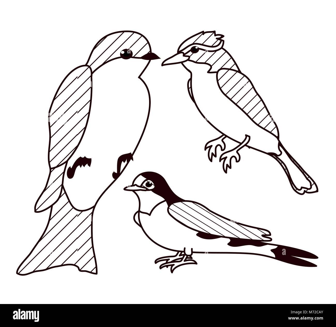 Pájaros Hermosos Dibujos En Blanco Y Negro Ilustración Del Vector