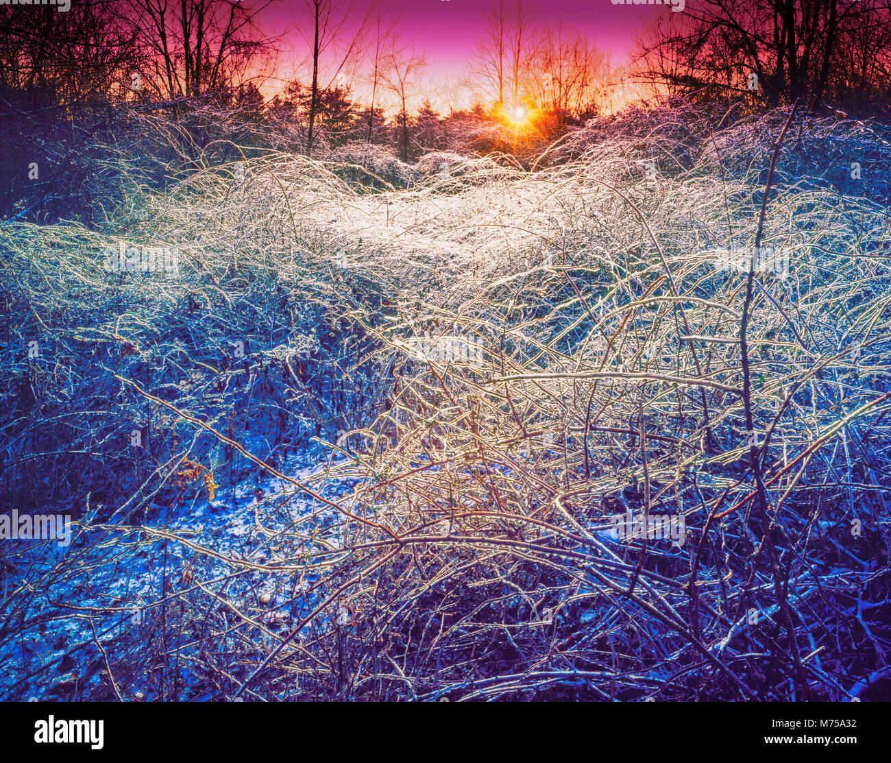 Bosque cubierto de hielo, Watchung Rservation, montañas Watchung New Jersey Foto de stock
