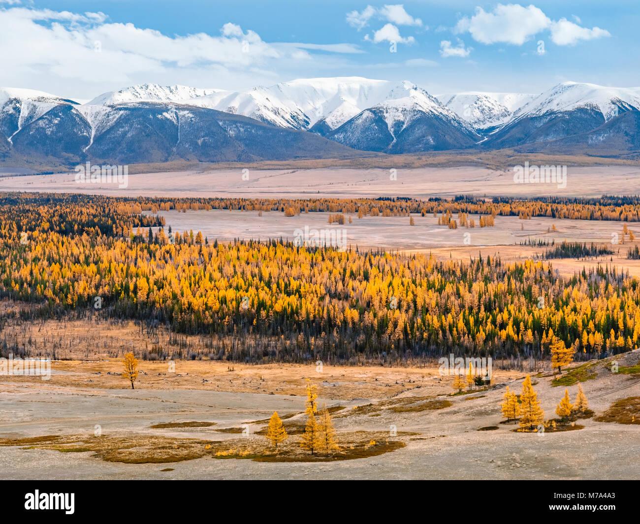 Impresionantes vistas a un gran valle, lleno de alerces de color amarillo, con montañas cubiertas de nieve en el Foto de stock