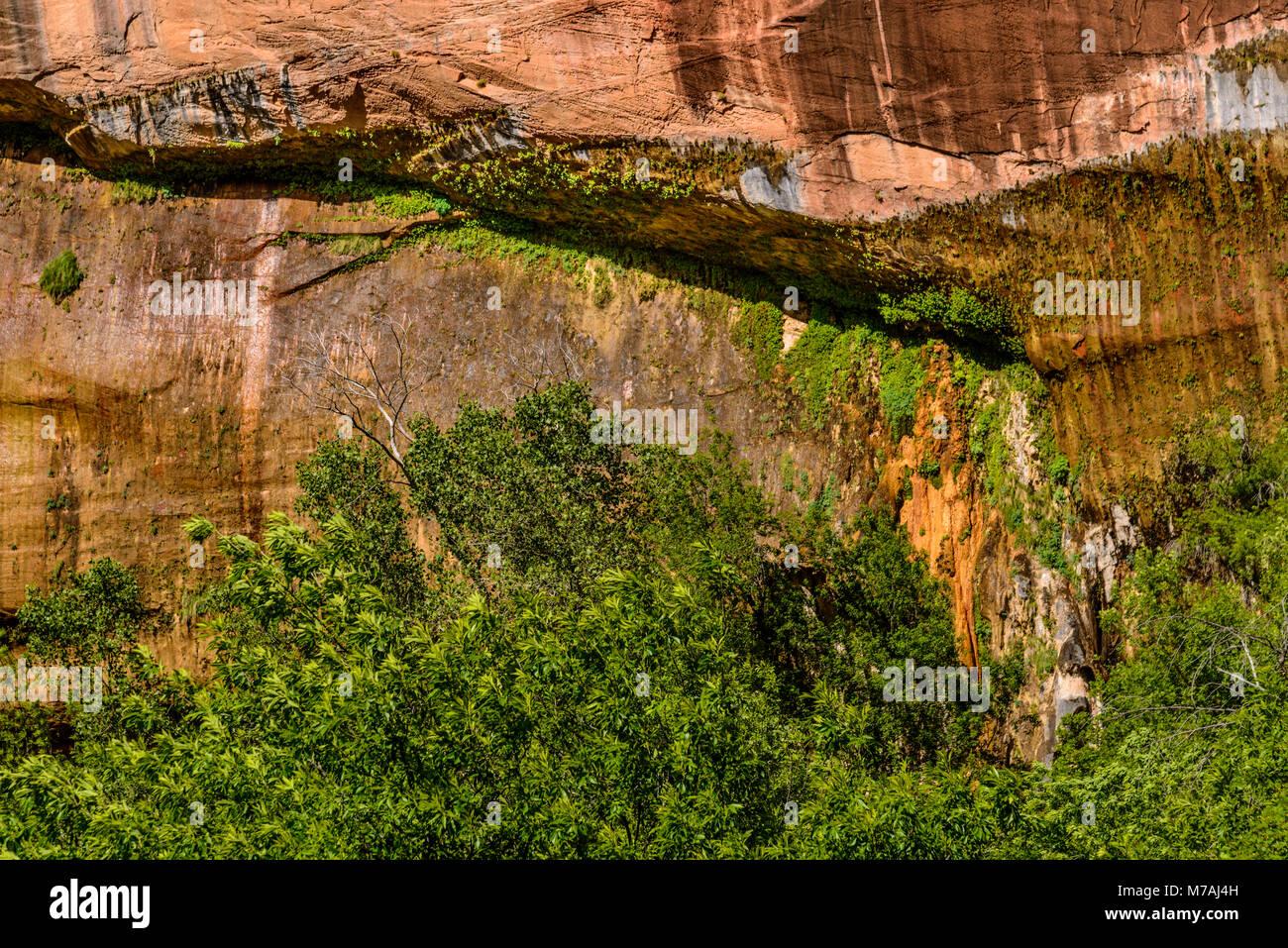 Los Estados Unidos, Utah, Condado de Washington, Springdale, el Parque Nacional de Zion, Zion Canyon, llorando rock Imagen De Stock