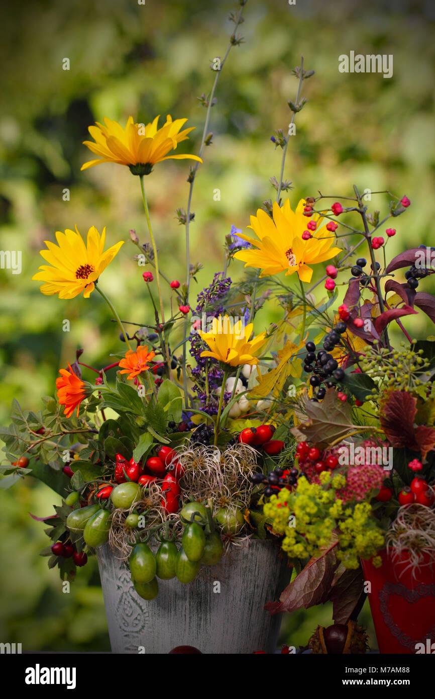 Flor Otoñal Imágenes De Stock Flor Otoñal Fotos De Stock