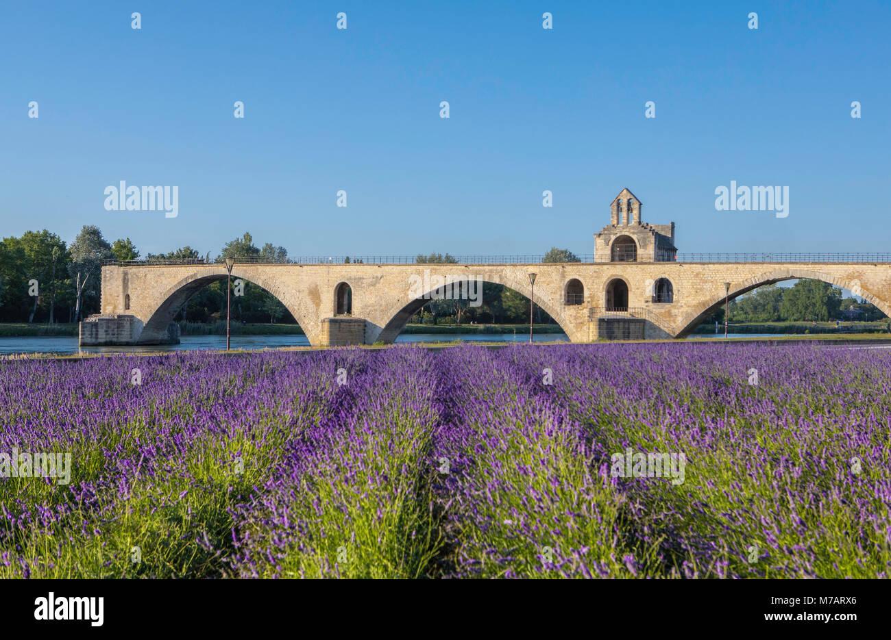 Francia, la región de Provenza, de la ciudad de Aviñón, San Benezet Bridge, W.H., campo de lavanda Imagen De Stock