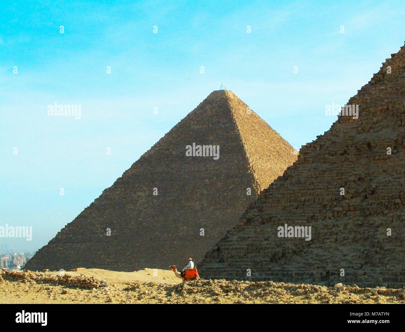 Hombre en un camello en frente de las pirámides de Giza, las pirámides de Giza, en El Cairo, Egipto Imagen De Stock