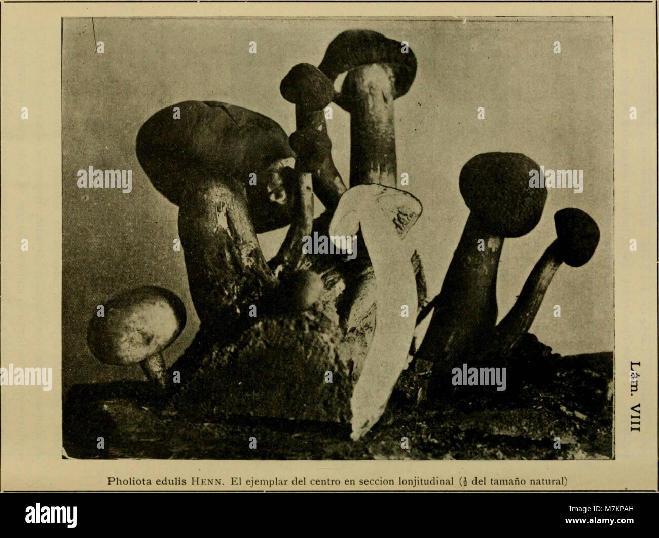 Boletín del Museo Nacional de Chile (1916) (20202713689) Foto de stock