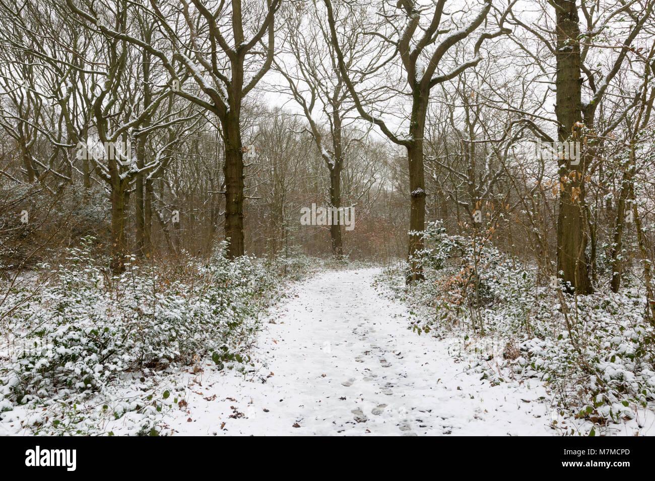 Bonito bosque, parte del antiguo bosque de la Blean, en nieve, Dunkerque, Faversham, Kent Foto de stock