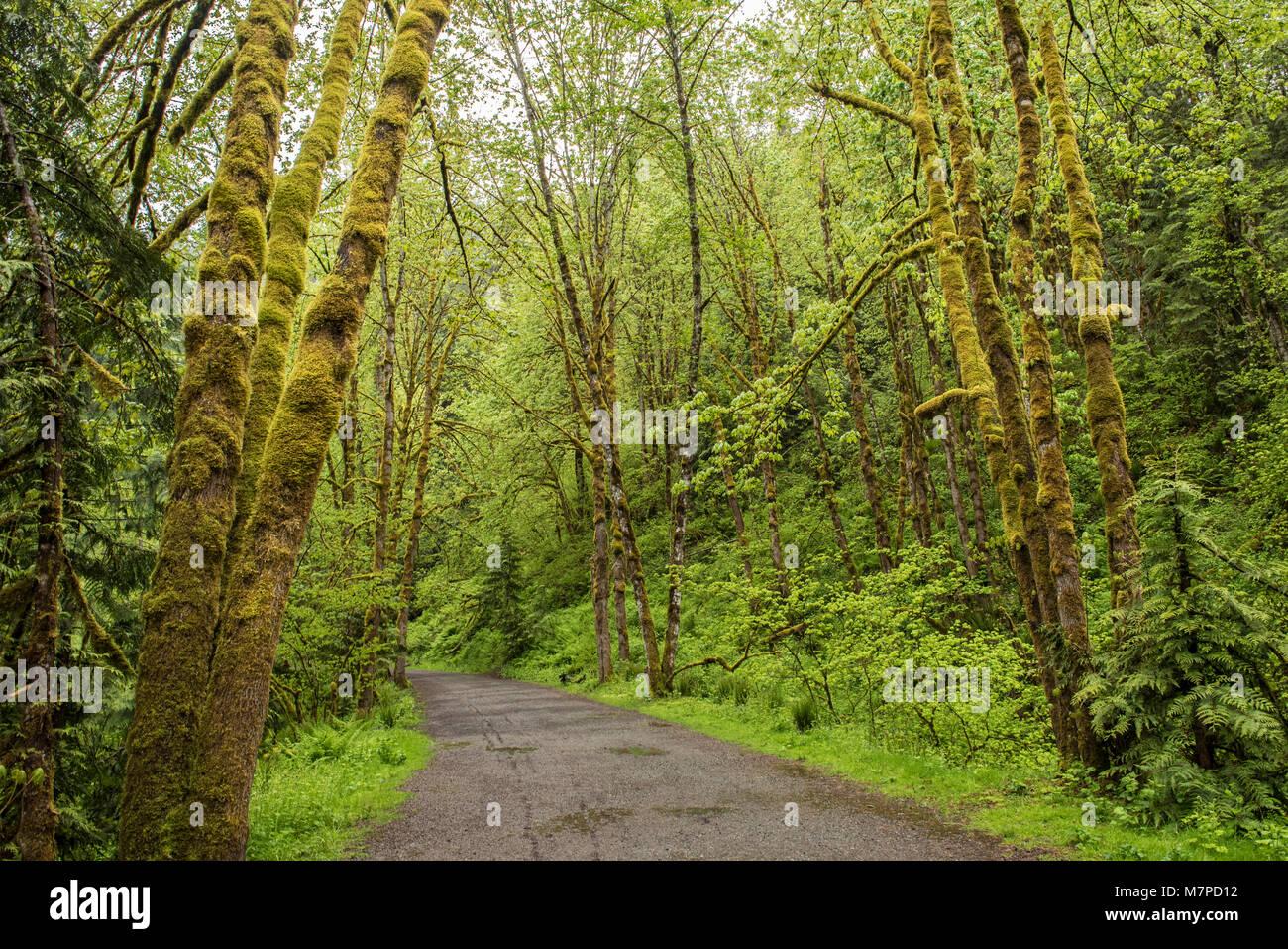 Ruta de senderismo en el Parque Provincial Coquihalla Canyon, cerca de esperanza, British Columbia Foto de stock