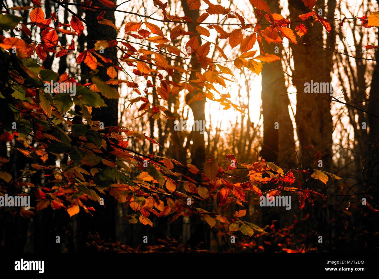 Coloridos árboles de otoño en la brillante luz del sol Foto de stock