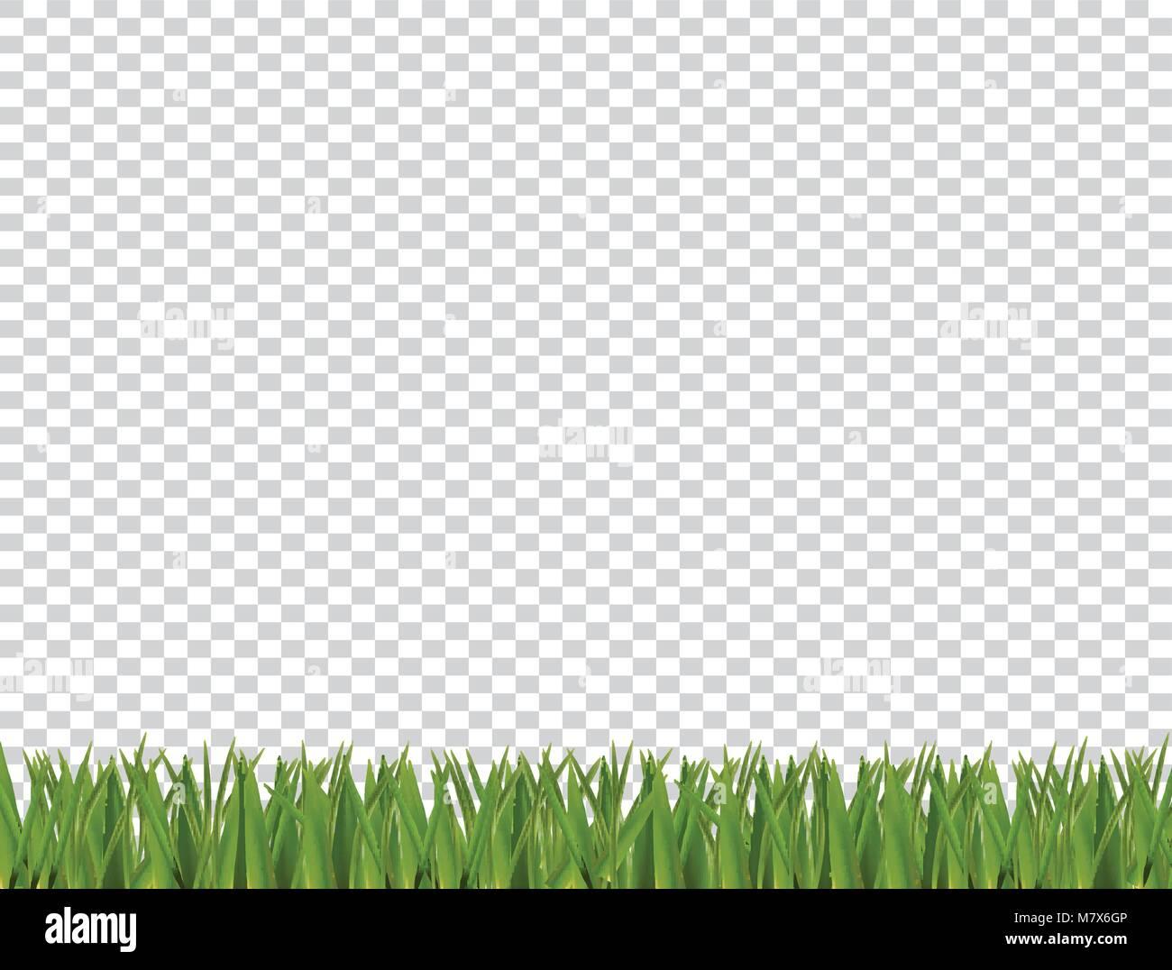 Verde césped realista borde horizontal aislado sobre fondo ...