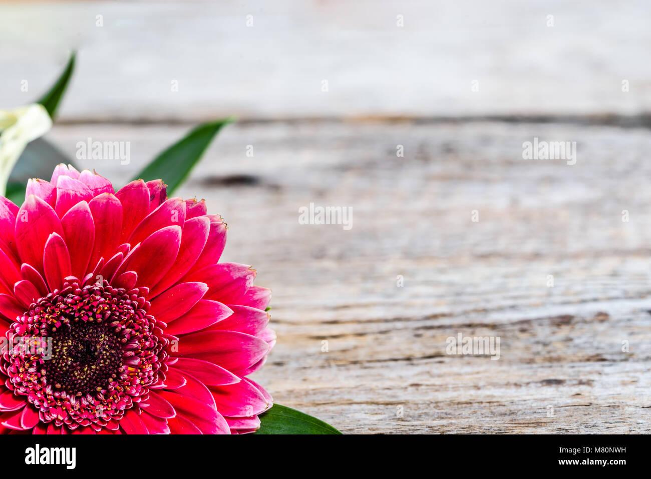 Gerbera flor, Marco tarjeta para el día de las madres, el día de la ...