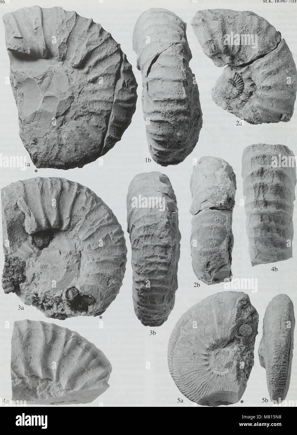 Boletín del Museo Histort Natural. Serie de Geología (1998) (20494283575) Foto de stock