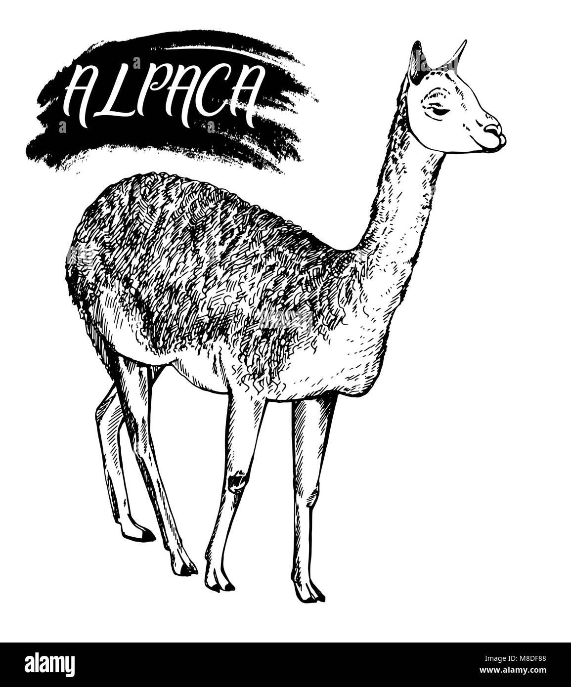 Fantástico Alpaca Para Colorear Bosquejo - Ideas Para Colorear ...