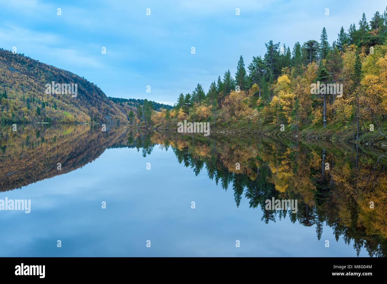 Calma plácido lago de agua dulce con un denso bosque de árboles en la orilla Foto de stock