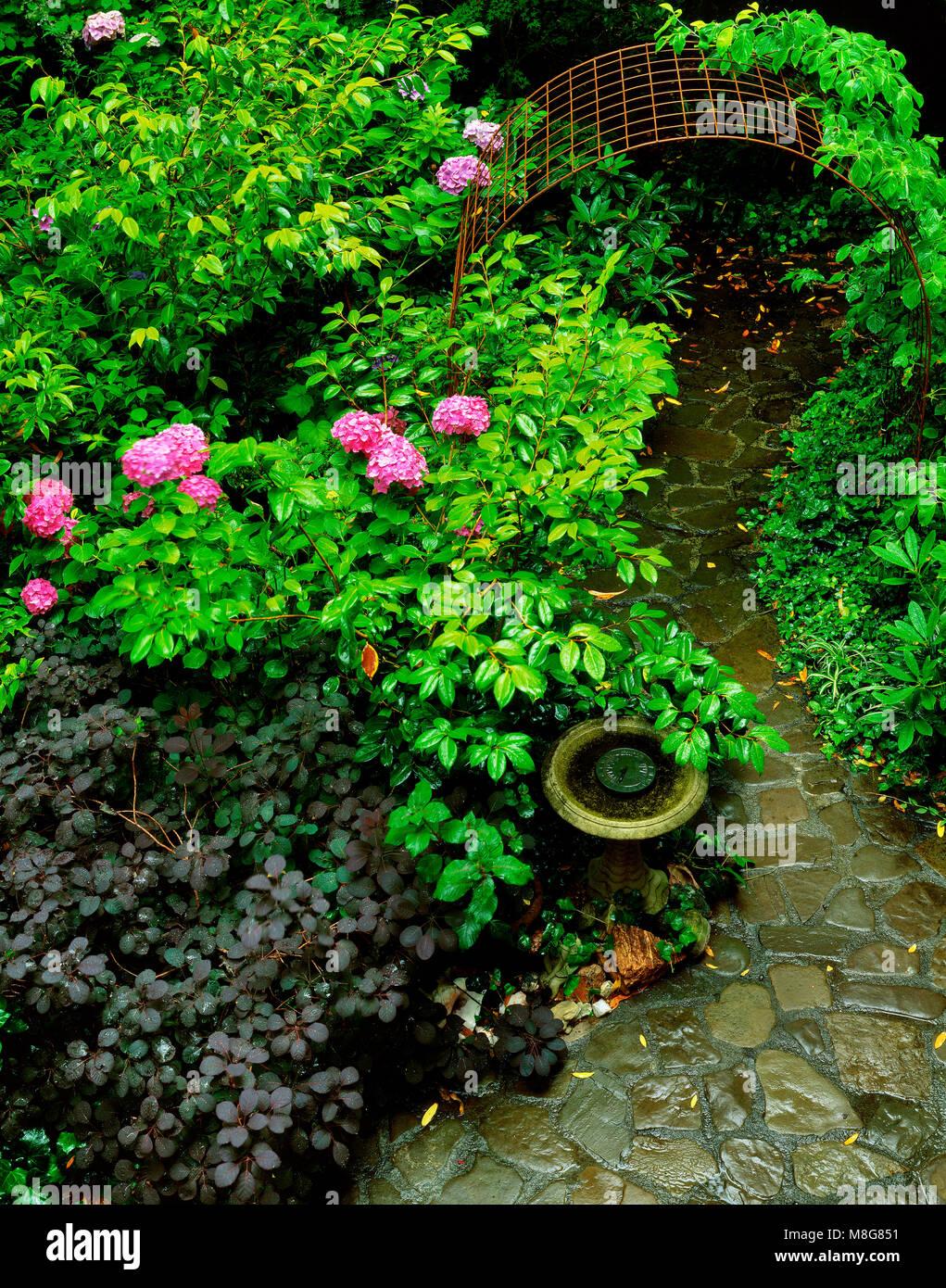 Camino del jardín, Cypress Garden, Mill Valley, California. Imagen De Stock