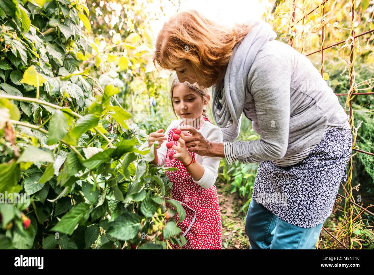 Mujer con su nieta senior de jardinería en el patio jardín. Imagen De Stock