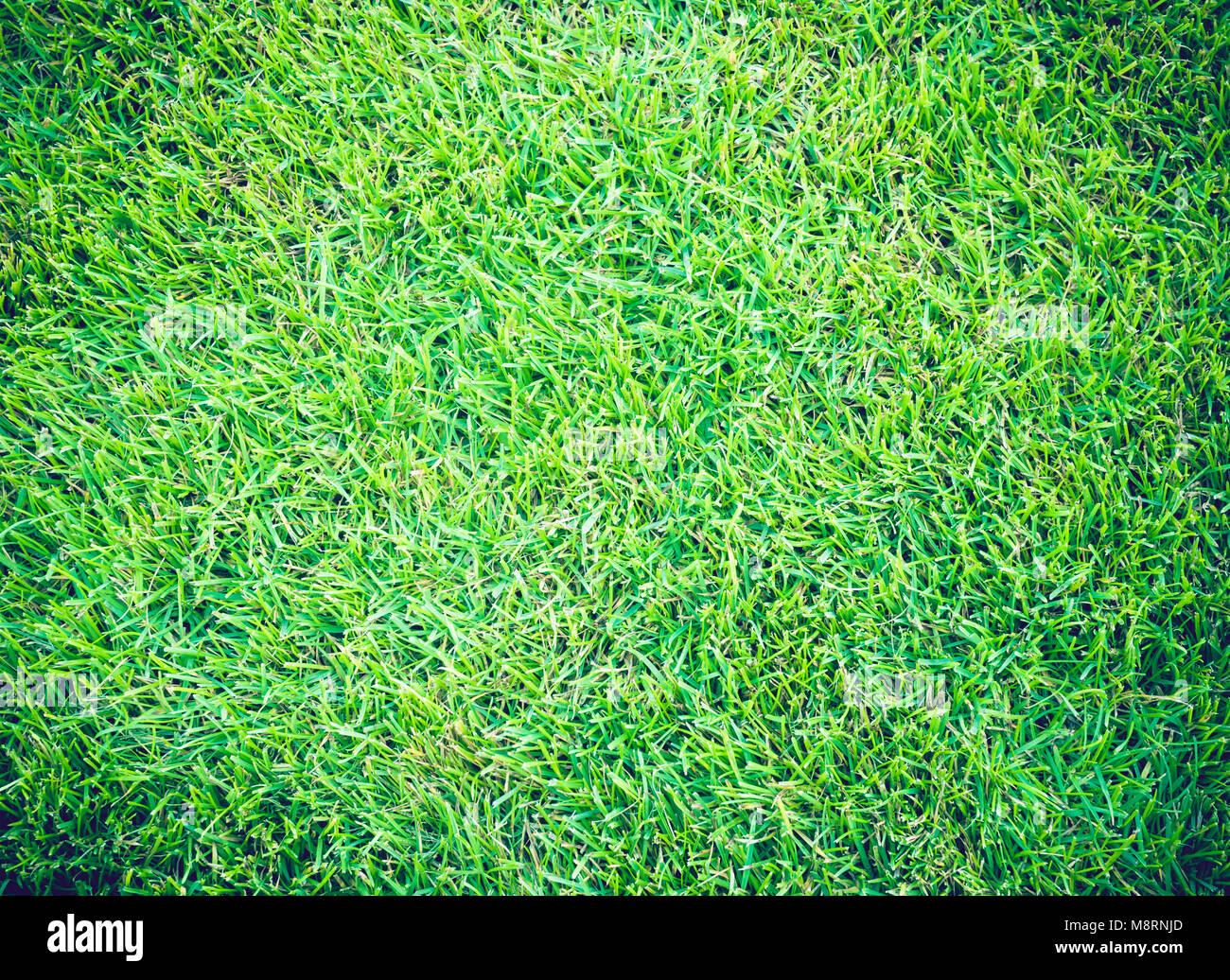 Campos de Golf de césped verde fondo de textura patrón Foto de stock