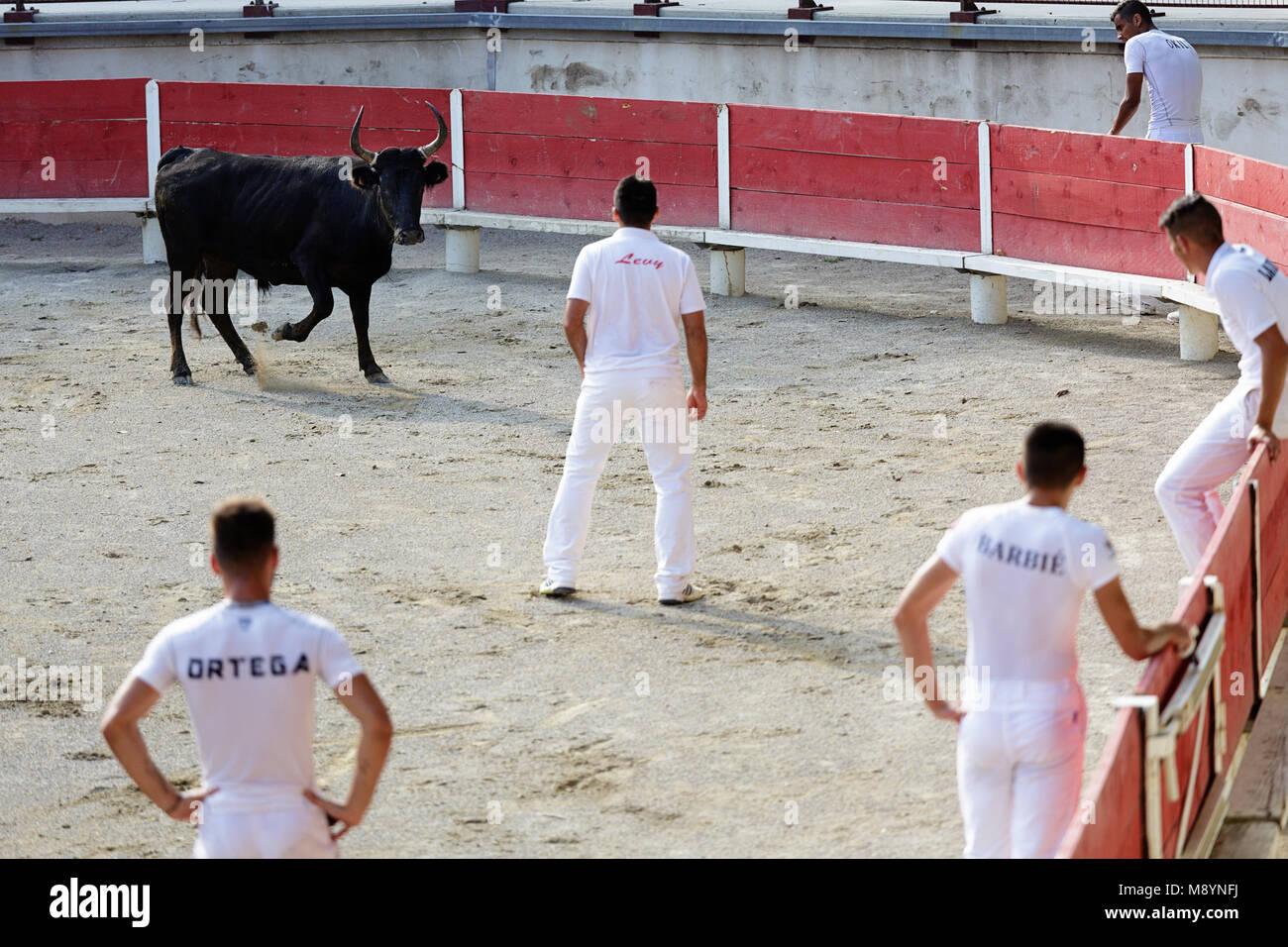 Toreros en el tradicional vestido blanco observando el toro negro en las  corridas de toros en e8f6e463f21